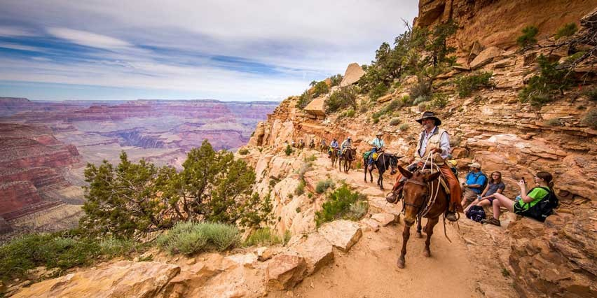 Mule Ride Grand Canyon