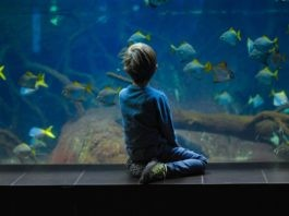 Featured Largest & Beautiful Aquariums of world
